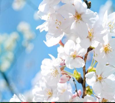 Çiçek - Spa